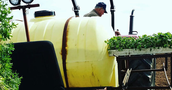 Photo of Elmwood Stock Farm farmer getting transplants out
