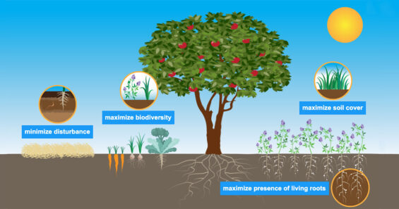 graphic showing four NRCS principles
