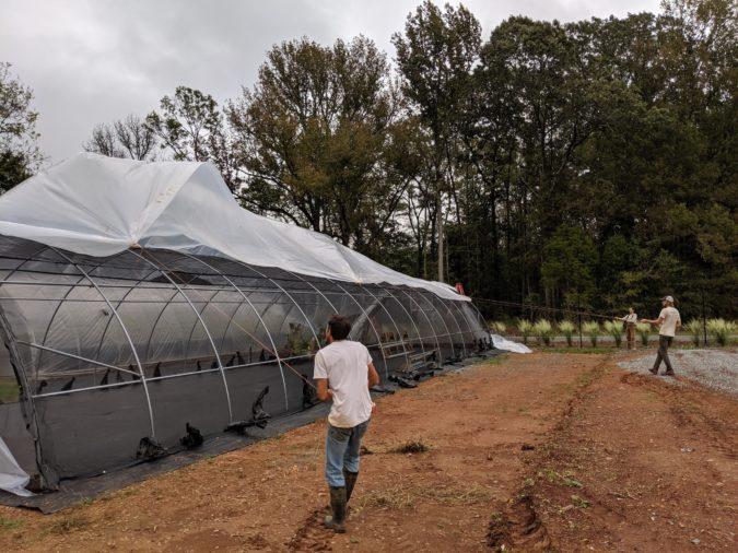 raising tarps over crops