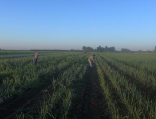 Managing Organic Fertility on Diversified Organic Farms