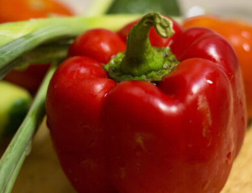 OFRF Grantee Releases Early-Yielding Red Pepper Variety