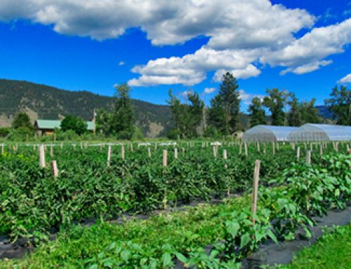 Biden Administration and Implications for Organic