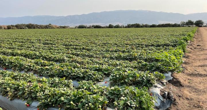 Organic Fields Tour at USDA ARS